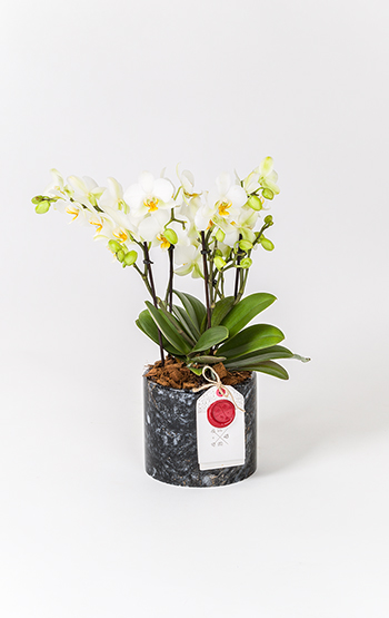 Online çiçek Göndermenin En şık Yolu Bloom And Fresh
